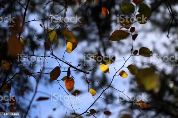 Ett Tak Av Färgglada Löv På Hösten-foton och fler bilder på Beskrivande färg