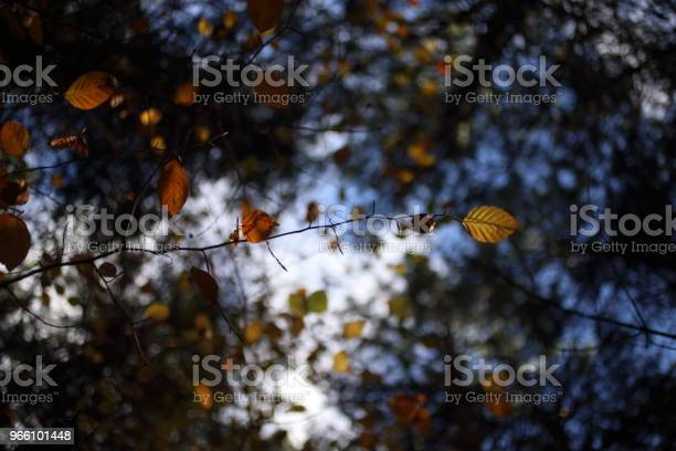 A Canopy Of Colorful Leaves In Autumn Stock Photo - Download Image Now