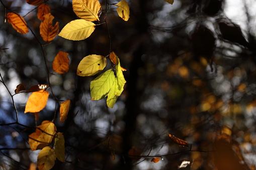 A Canopy Of Colorful Leaves In Autumn - Fotografias de stock e mais imagens de Amarelo