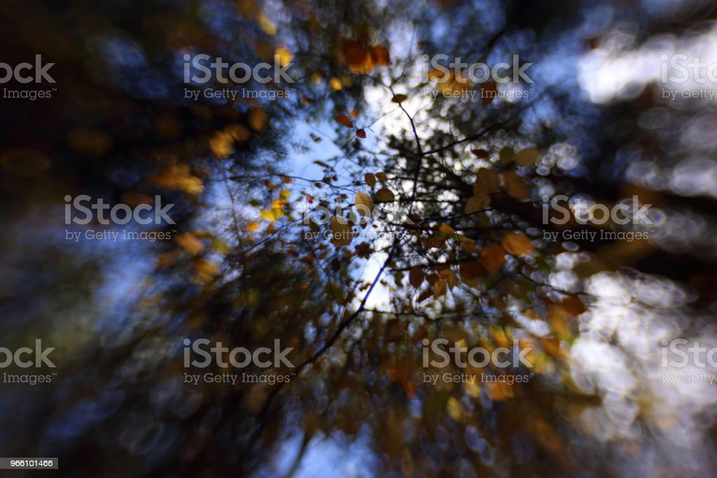 A canopy of colorful leaves in autumn - Royalty-free Acácia Foto de stock