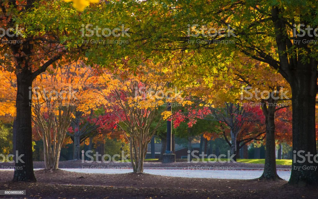 Canopy of Fall Foliage in Morning Light stock photo