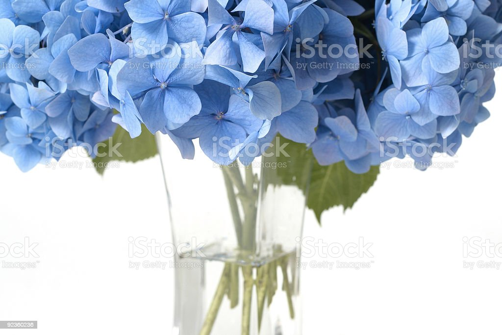 Canopy of Flowers royalty-free stock photo
