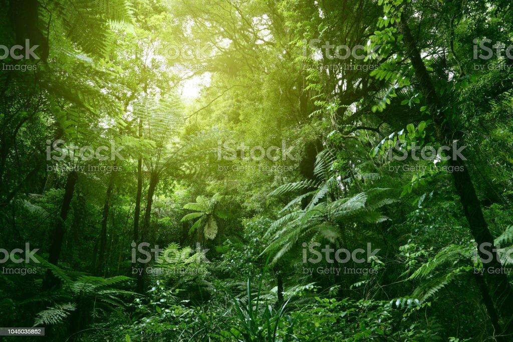 Canopy of jungle - Стоковые фото Балдахин роялти-фри
