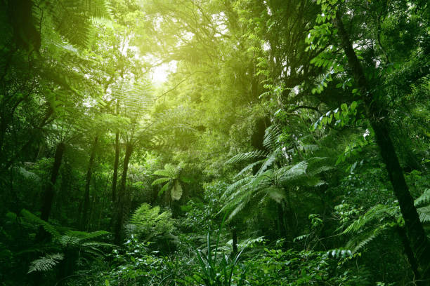 Canopy of jungle Sunlit tree canopy in tropical jungle tropical rainforest stock pictures, royalty-free photos & images