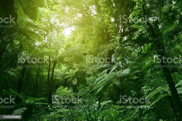 Canopy Of Jungle — стоковые фотографии и другие картинки Балдахин