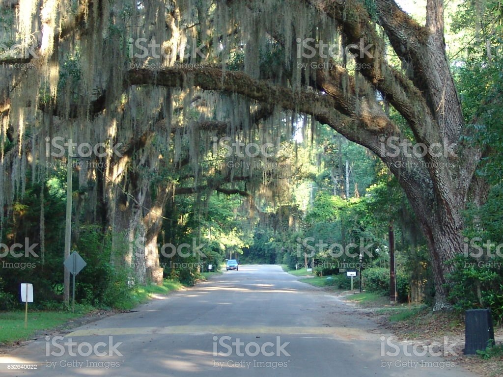 Canopy road, Madison Street, Jefferson County Florida stock photo