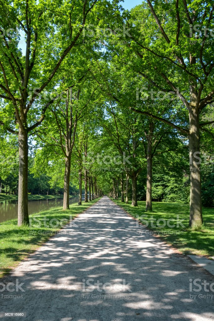 A Canopy road with trees to either side in the Karlsaue park in Kassel on a sunny day - Foto stock royalty-free di Albero