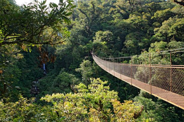 Canopy Walk stock photo