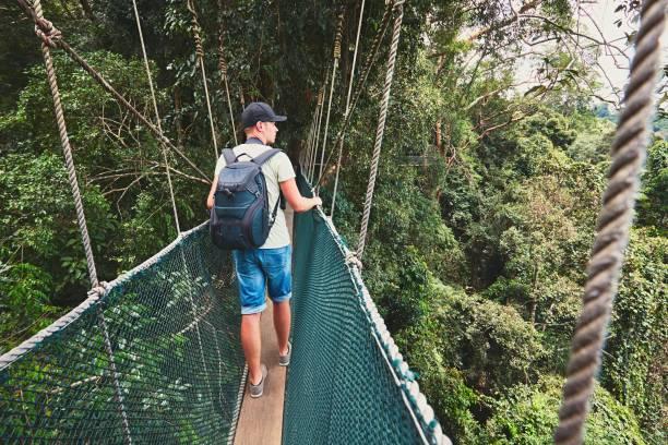 canopy walk - baumwipfelpfad stock-fotos und bilder