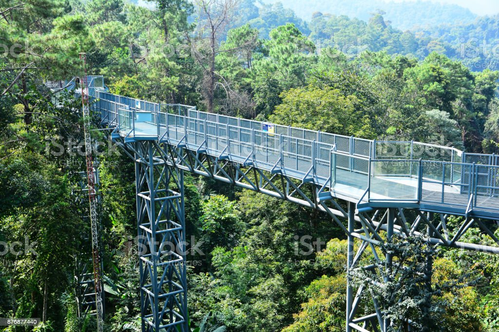 Canopy walkway at Queen Sirikit botanic garden Chiangmai,Thailand stock photo