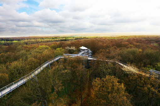 Canopy Walkway in Germany, Hainich National Park