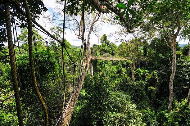 Canopy Walkway of Kakum National Park stock photo