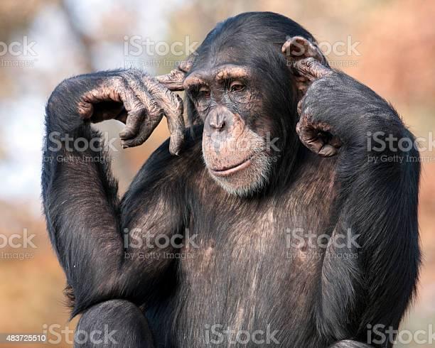 Cant hear you picture id483725510?b=1&k=6&m=483725510&s=612x612&h=h8dxx tzfjm7tjr880gbdnlznkhec2q r2es7sjeb1e=