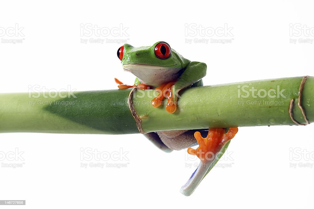 Can't Hold On royalty-free stock photo