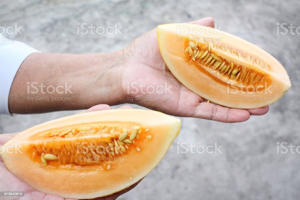 Cantaloupe melon on hand royalty-free stock photo