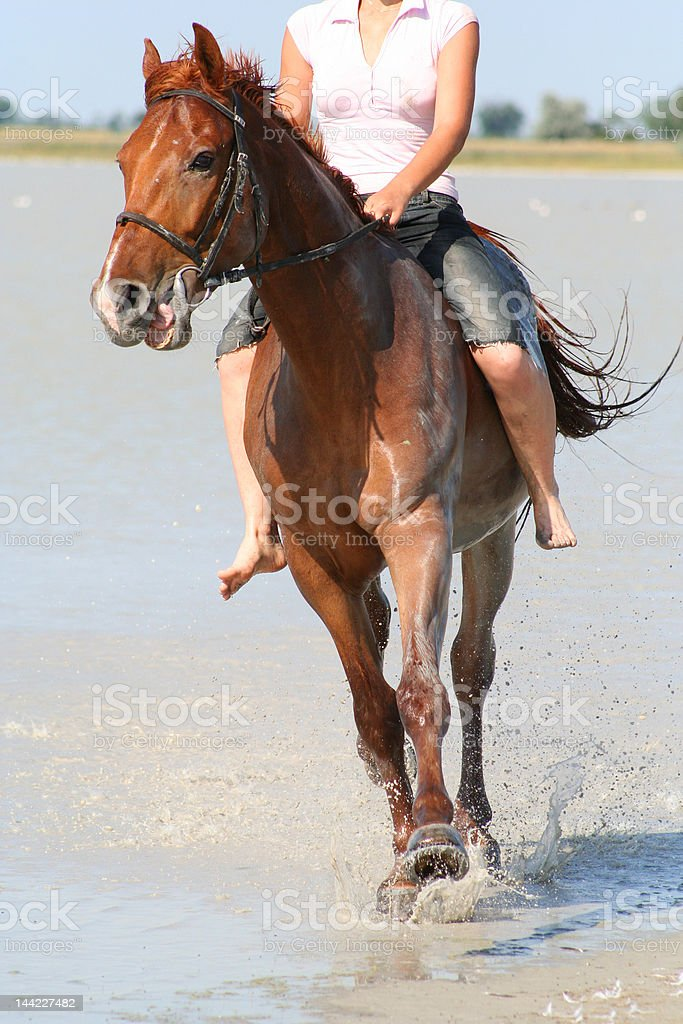 Canter Trough Dirty Water royalty-free stock photo
