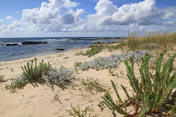 Canto Marinho beach stock photo