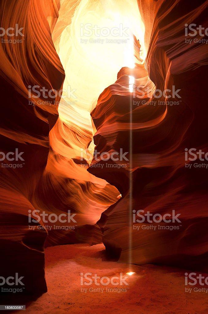 Canyon Antelope in Arizona. royalty-free stock photo