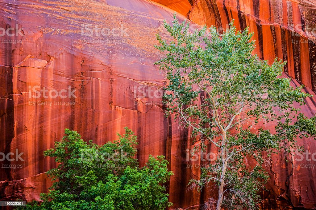 canyon country landscape royalty-free stock photo