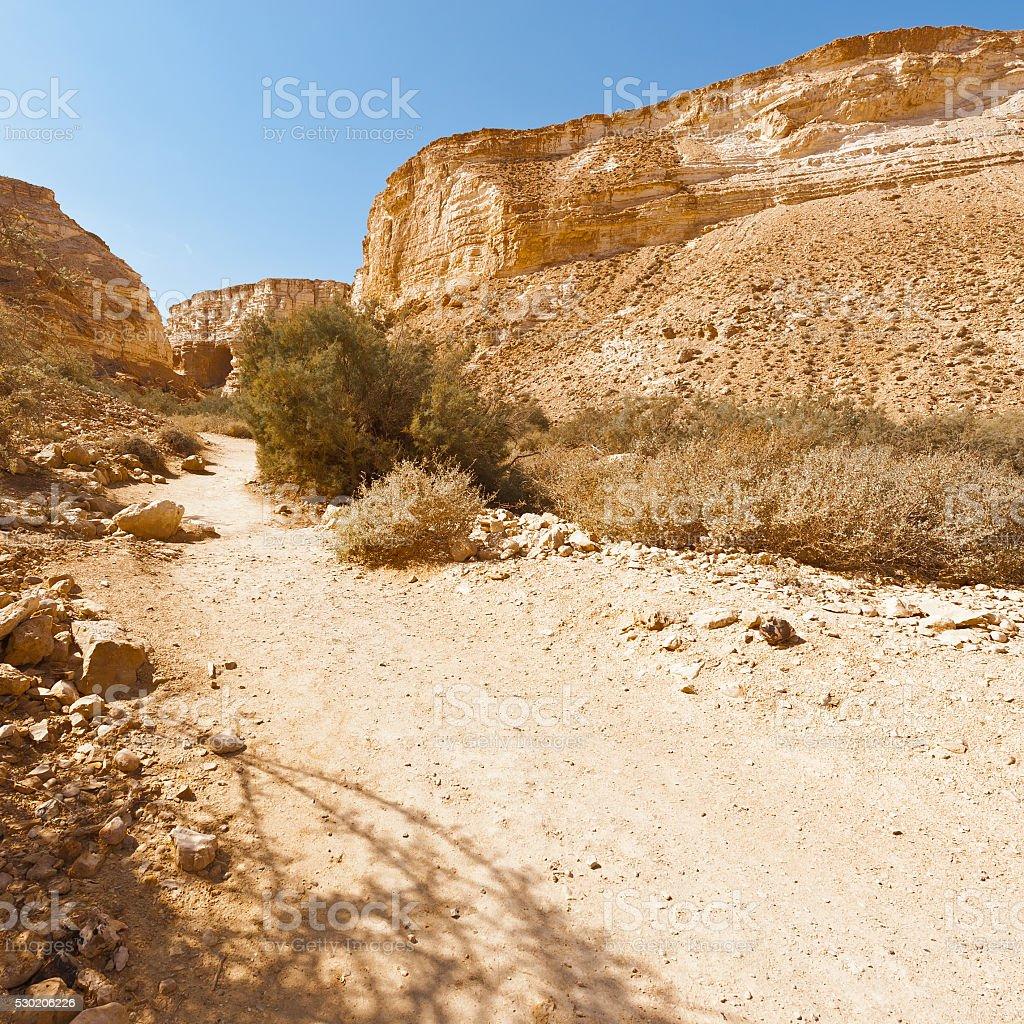 Canyon En Avedat stock photo