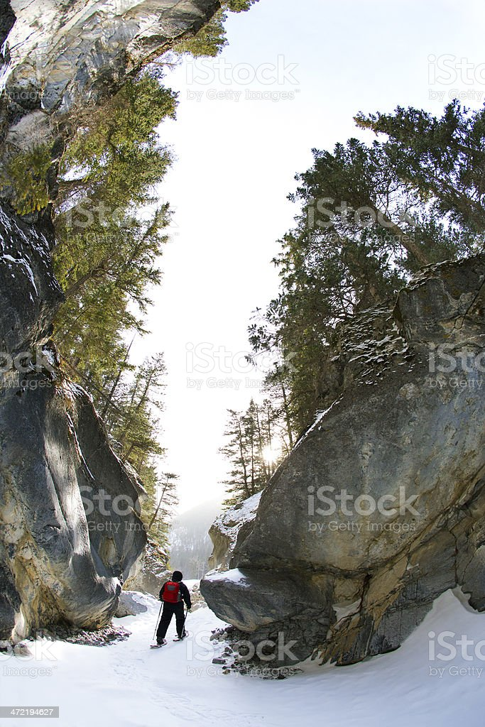 Canyon Snowshoe stock photo