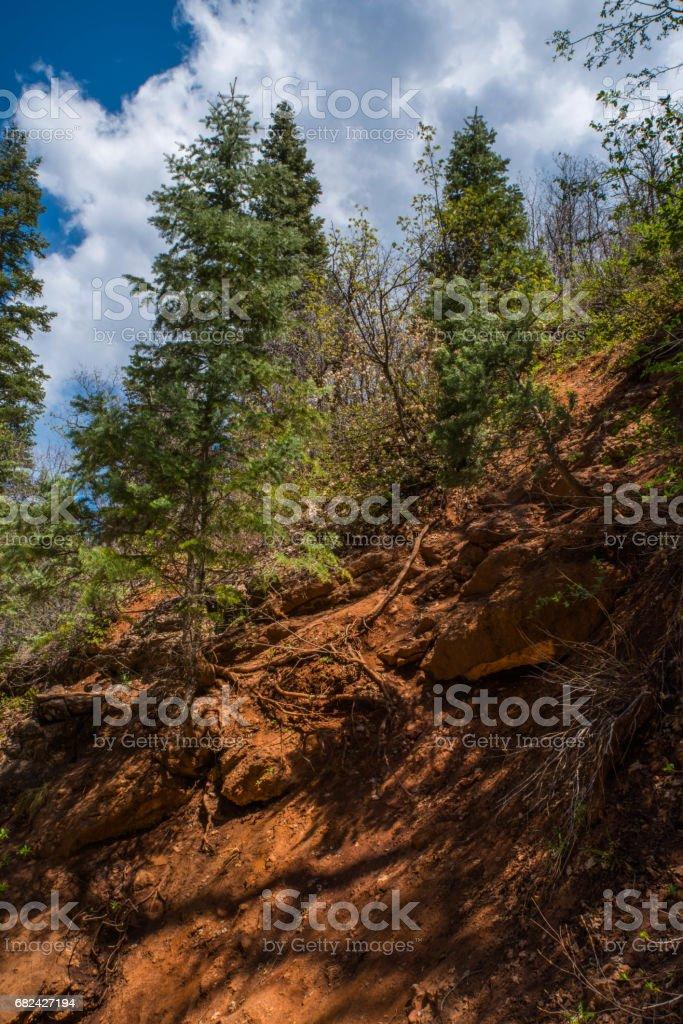 Canyon Trees photo libre de droits