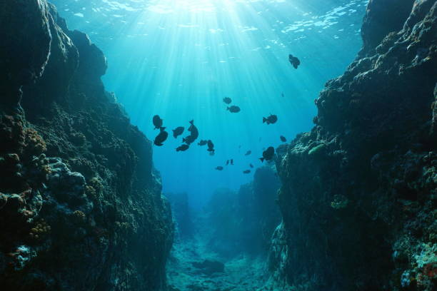 Canyon underwater with sunlight Pacific ocean Small canyon underwater carved by the swell into the fore reef with sunlight through water surface, Huahine island, Pacific ocean, French Polynesia undersea stock pictures, royalty-free photos & images