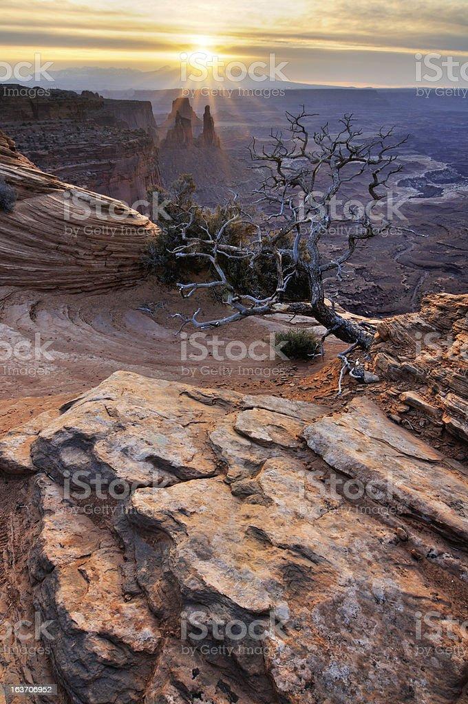 Canyonlands sunrise landscape with dry tree royalty-free stock photo