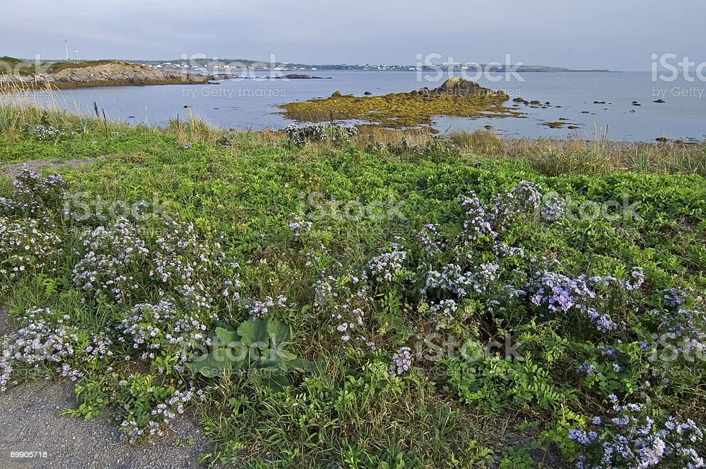 Cap Auguet Eco-Trail Area, Isle Madame, Nova Scotia royalty-free stock photo