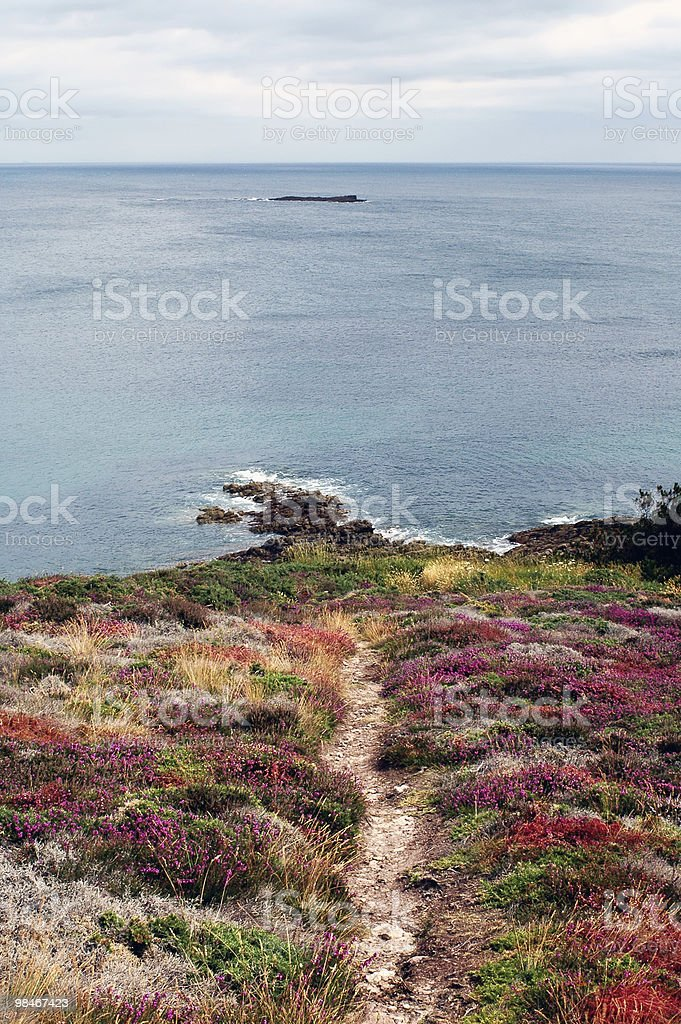 Cap Frehel (Brittany, France) - A flowered promontory royalty-free stock photo