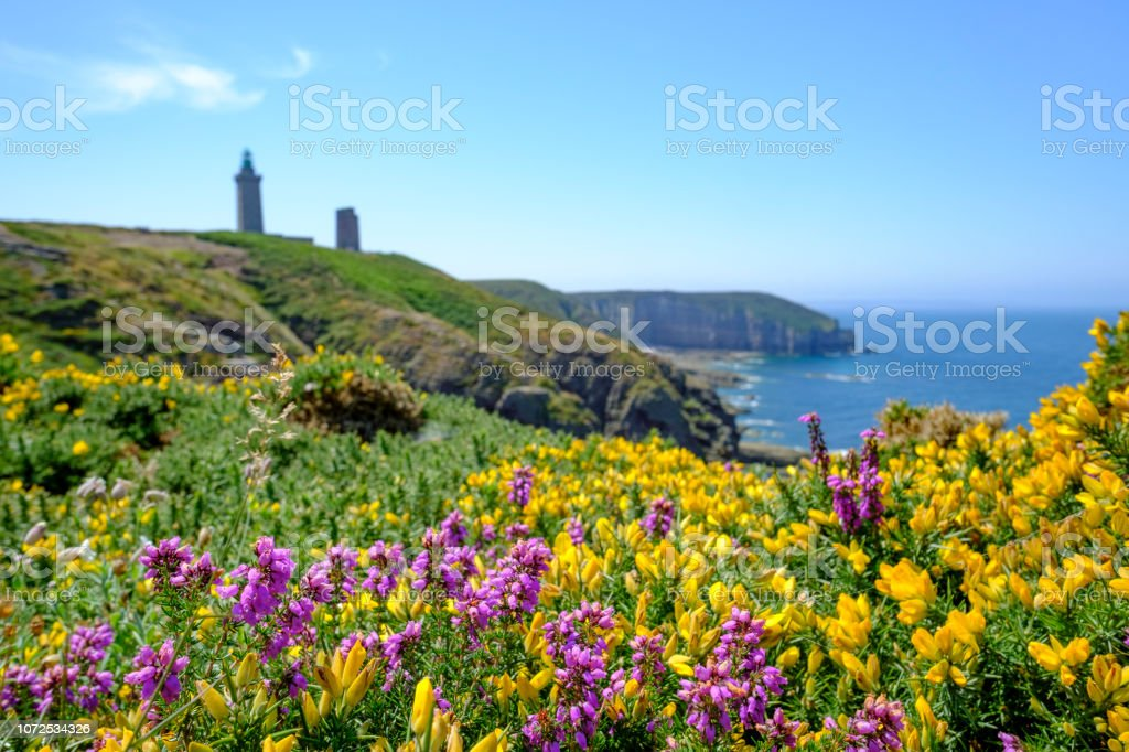 Cap Frehel cliffs with yellow gorse and violet heather flowers and lighthouse. Brittany, France - foto stock