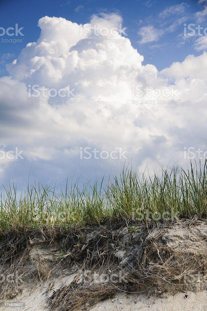 Cape Cod Beach Grass royalty-free stock photo