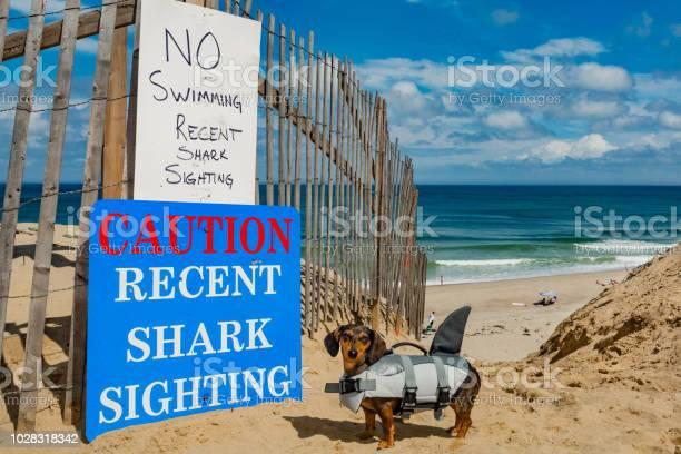 Cape cod dog picture id1028318342?b=1&k=6&m=1028318342&s=612x612&h=bq5ne9fzmh5wjra85mvos1unrwf0d9hj2epuh0qro3c=