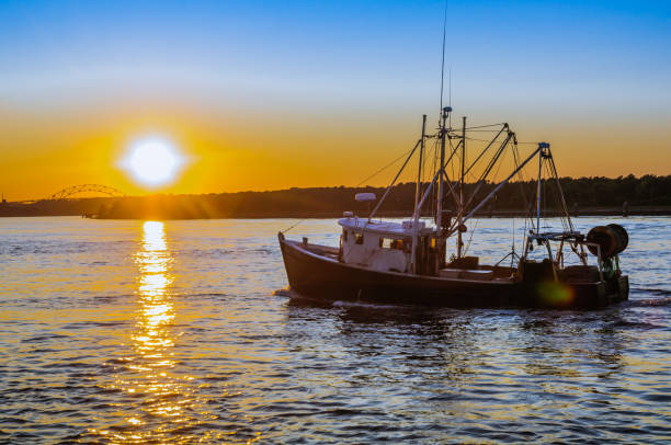 cape cod evening - fishing boat stock pictures, royalty-free photos & images
