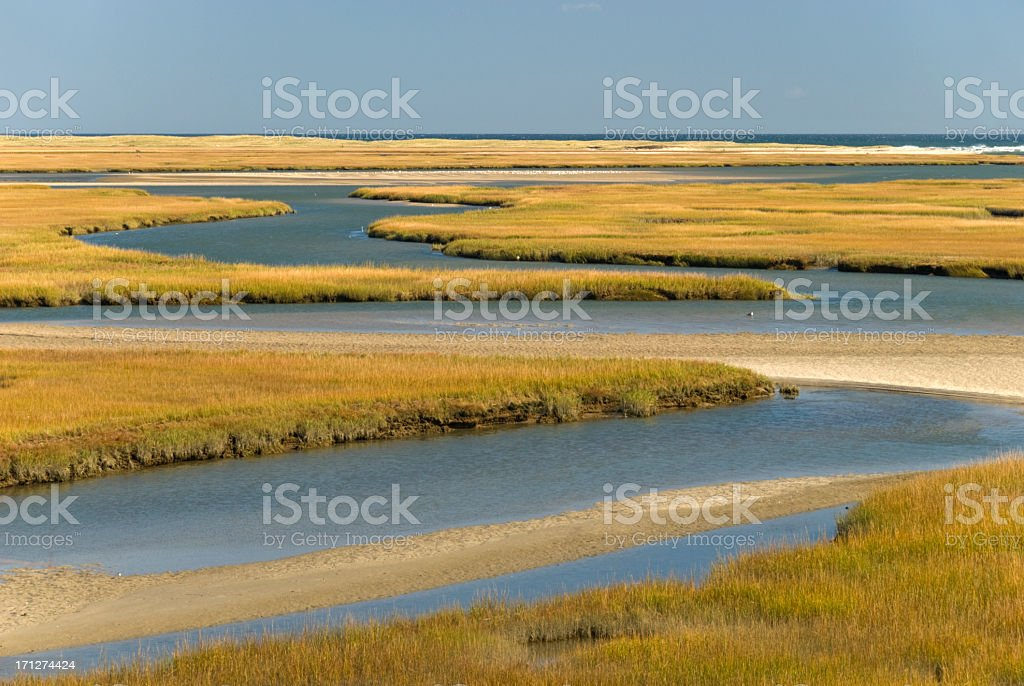 Cape Cod Wetlands royalty-free stock photo