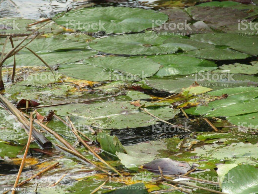 Cape Flora royalty-free stock photo