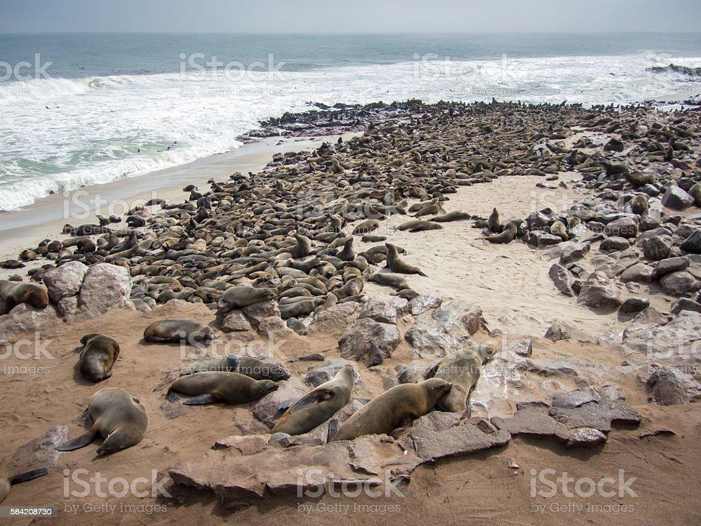 Cape Fur Seal (Arctocephalus pusillus) Colony, Cape Cross, Skeleton Coast, Namibia stock photo