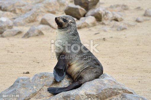 Cape fur seal sits on the stone coast of Atlantic ocean. Seal colony on the Cape Cross, Skeleton Coast, Namibia