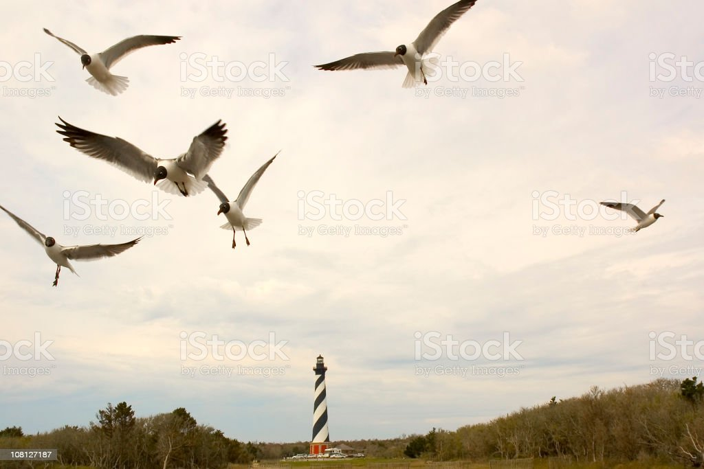 Cape Hatteras Seagulls stock photo