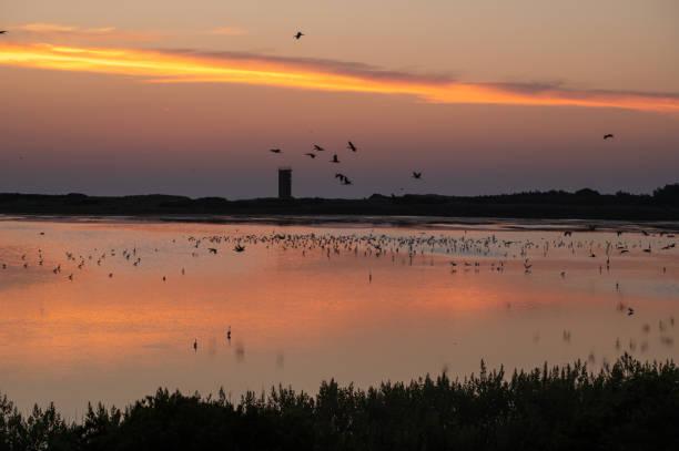 Cape Henlopen sunrise birds at Gordons Pond stock photo