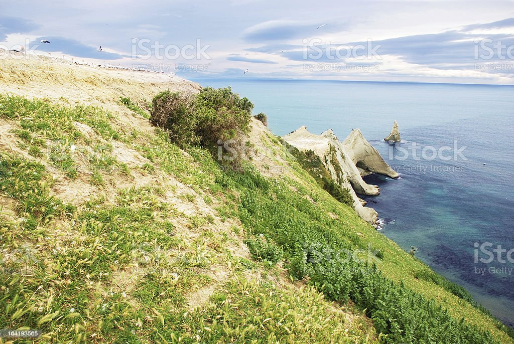 Cape Kidnappers Gannet Colony stock photo