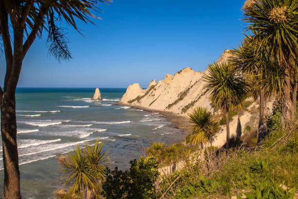 Cape Kidnappers near Napier New Zealand Cape Kidnappers with cabbage trees (Cordyline australis) in front, Napier, New Zealand headland stock pictures, royalty-free photos & images