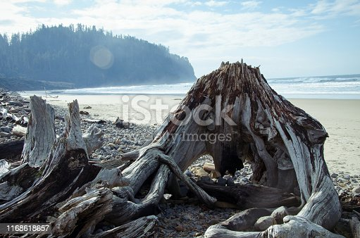 A formation of twisted driftwood on the Cape Meares beach