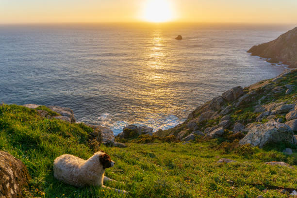 Cape of Finisterre with a dog, landscape in Galicia, Spain, on a day in spring stock photo