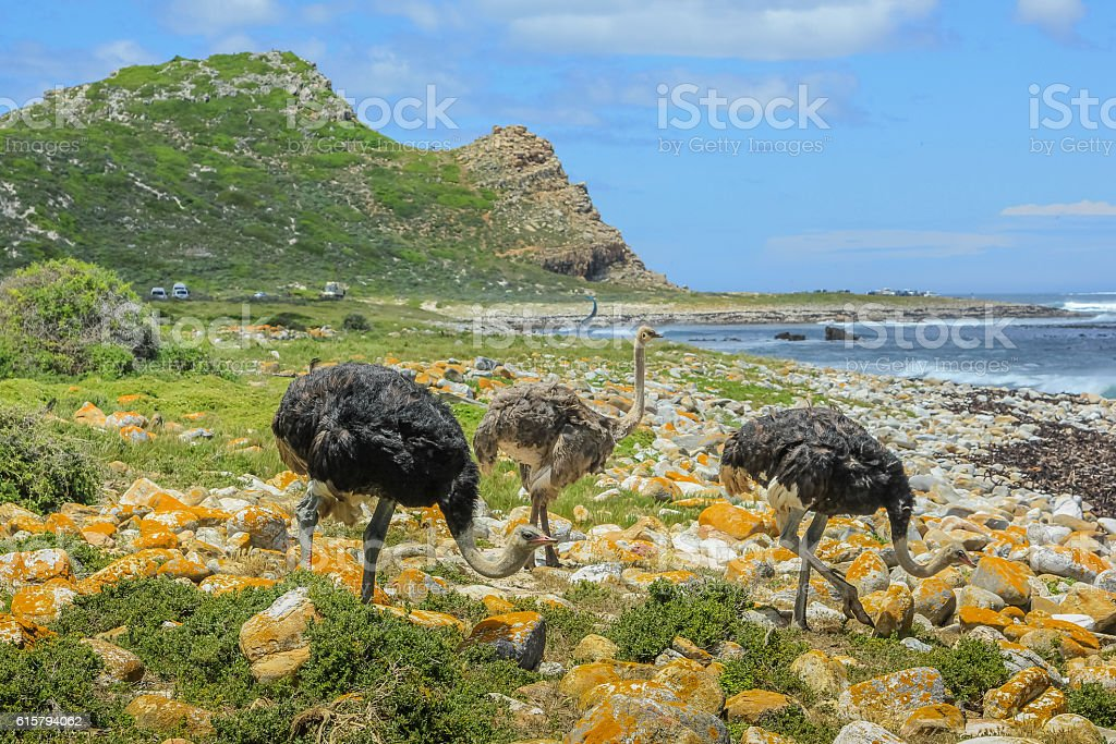 Cape of Good Hope South Africa stock photo