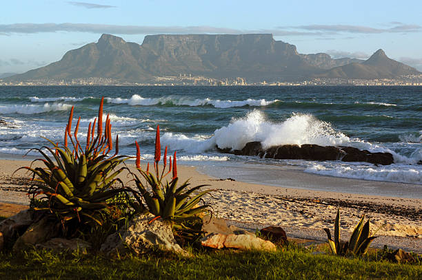 cape town and table mountain - cape peninsula stock pictures, royalty-free photos & images