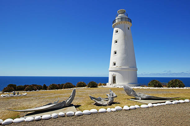 cape willoughby, australia - headland stock pictures, royalty-free photos & images