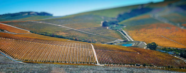 Cape Winelands Autumn Panoramic Scene Tilt-Shift Effect stock photo