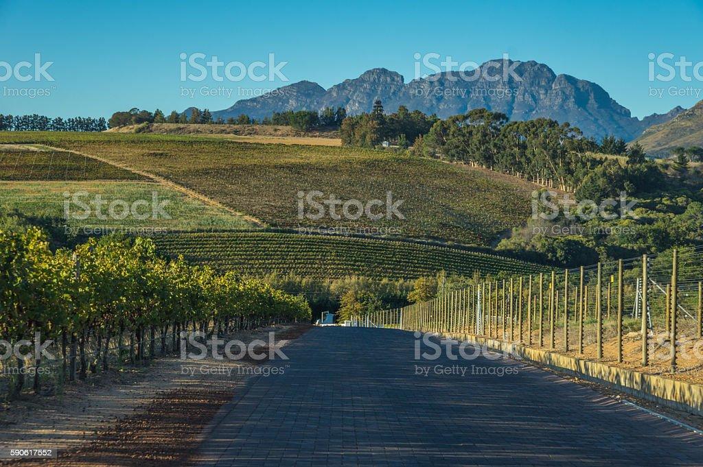 Cape Winelands stock photo