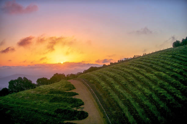Cape Winelands Sunset stock photo
